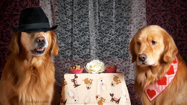 Canine Cafe