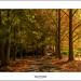 Autumn by John_Armytage