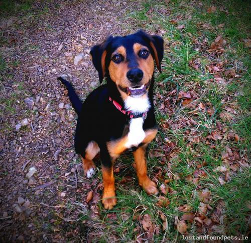 [Reunited] Sun, Jul 10th, 2016 Lost Female Dog - Wexford, Bree, Wexford