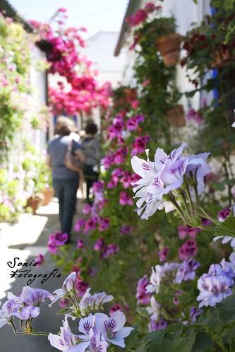 patios,Córdoba,flores,fotografia