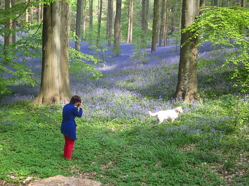 Danio et bois bleu