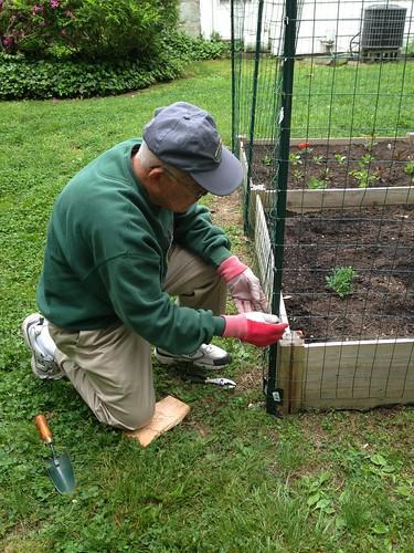 Dad & garden fence