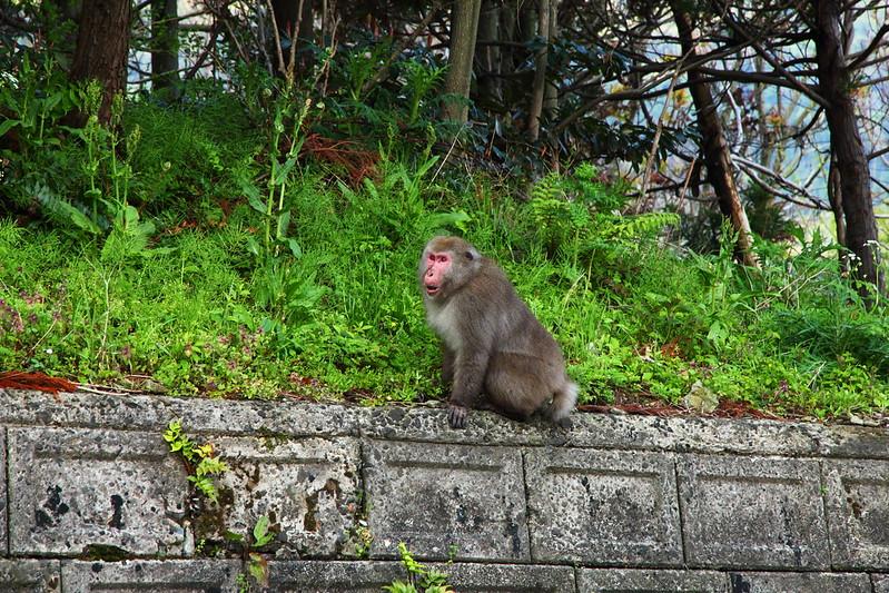 IMG_7326_2013 Nagano Trip