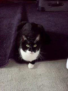 kitty rug