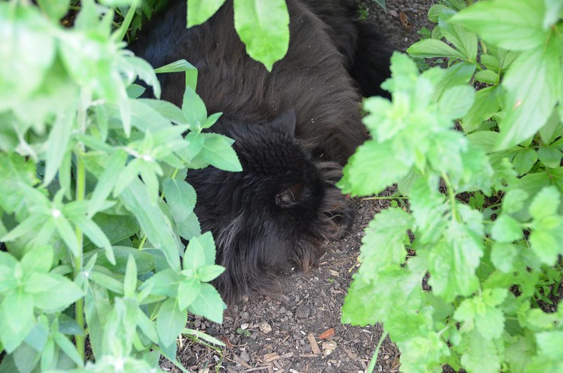 Nera hidden in the bushes having a sleep
