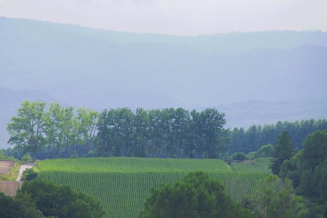 Another Landscape2