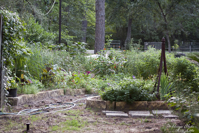 garden_latesummer
