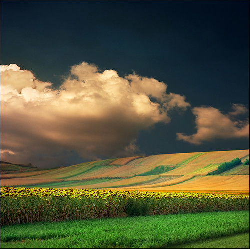 light sunset shadow summer sky orange green film nature grass yellow clouds landscape photography photo nikon europa day peace shadows view image serbia hills valley sunflower end fields agriculture priroda rolling vojvodina srbija the photopainting pejzaž vertorama katarinastefanovic katarina2353