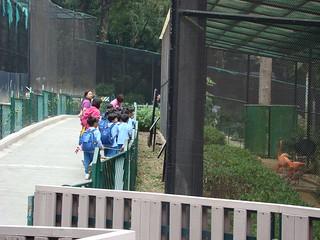 012 Schoolkinderen bij flamingo's
