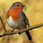 the Birds and Wildlife UK group icon