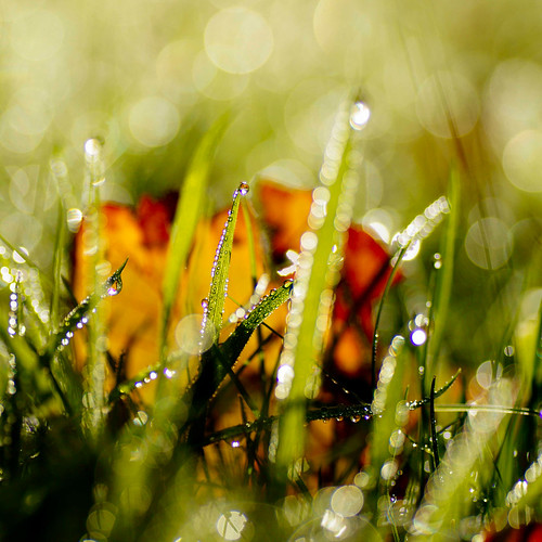 november autumn light sun macro wet grass wednesday droplets leaf bokeh herfst thenetherlands nat blad gras groningen leek nienoord woensdag 2013 atsjebosma