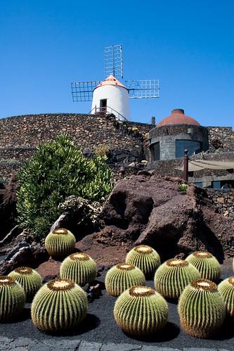 Cactus Garden by Cesar Manrique