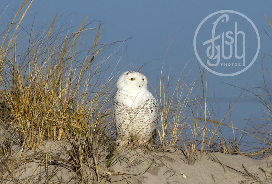 owl voyeur Jeff