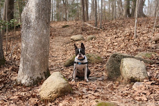 Charlie Powhite Hike Feb 2 (20)