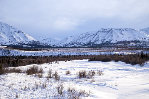Denali Winter Landscape