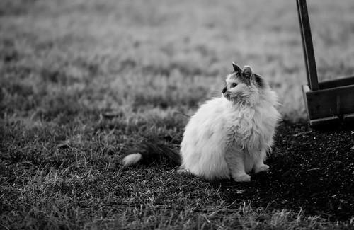 blackandwhite cats animal animals cat photography virginia nikon d800 hootie nikond800