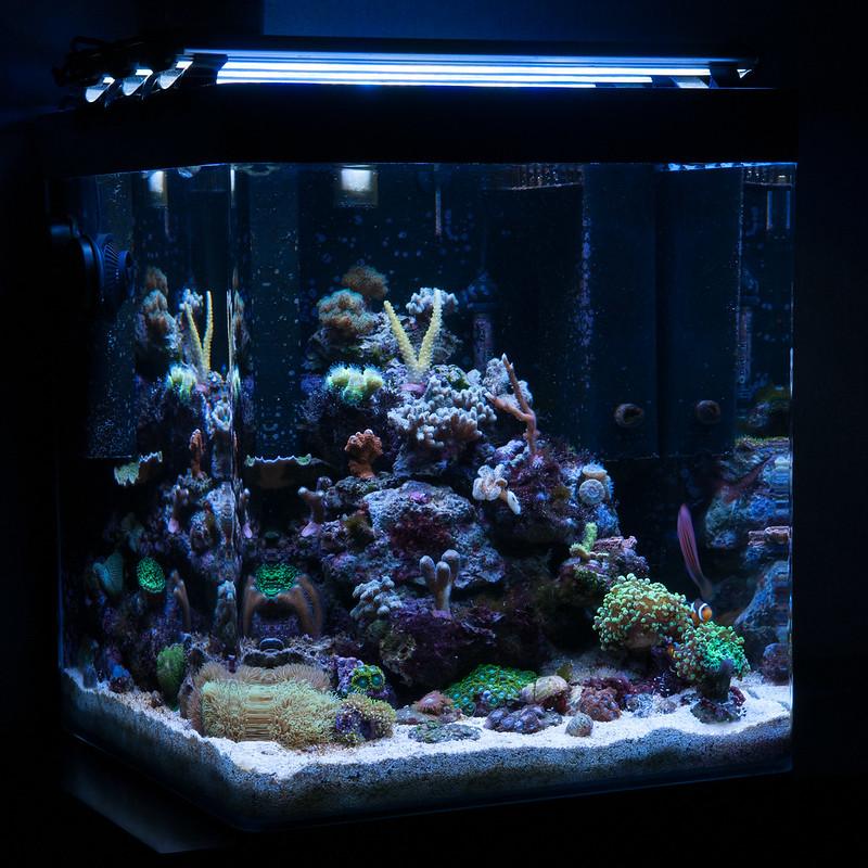 Mon Nano Récif 60 litres (BAC ARRETE) 13294875195_dfea9fd39b_c