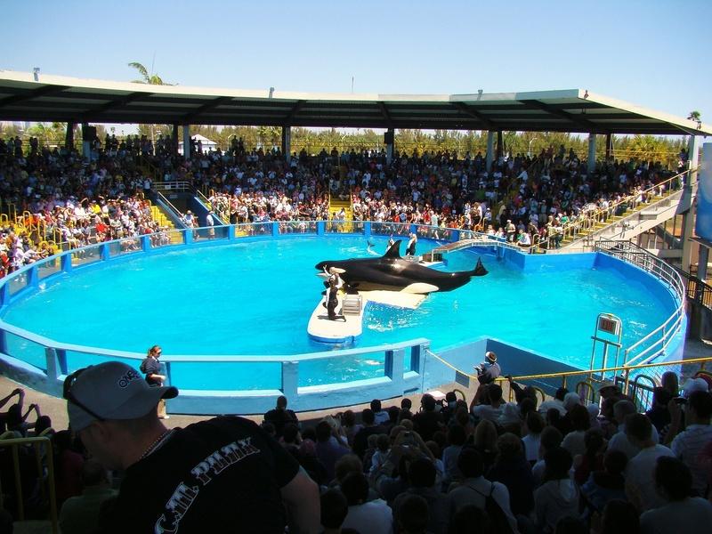 Lolita-Killer-Whale