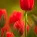 Simply Red by DonnerE