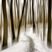 Foggy Winter Woods, surreal version by justbelightful