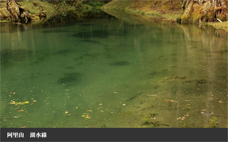 阿里山湖水綠