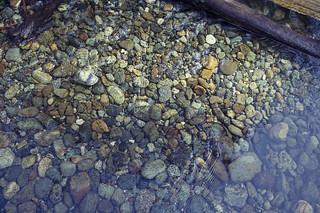 Fern Canyon, Prairie Creek Redwoods State Park, CA | Roland Krinner