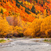 That Autumn Backdrop || ARROW RIVER || ARROWTOWN by rhyspope