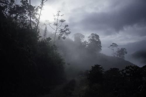 En #elaguila #valledelcauca se puede caminar entre las nubes ☁ 🍃  #travelphotography #mist #hicking #ivnrjs