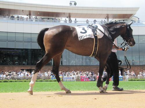 函館競馬場のダッグアウトパドックから見た馬