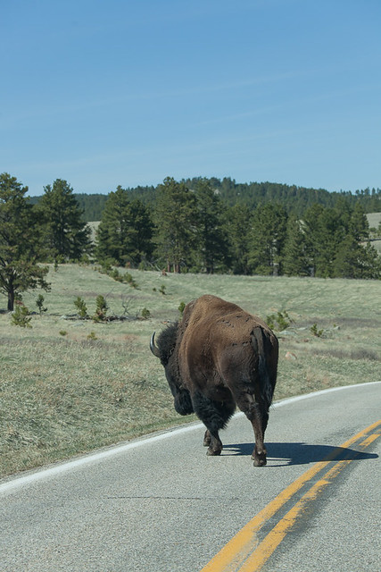 Buffalo Right of Way