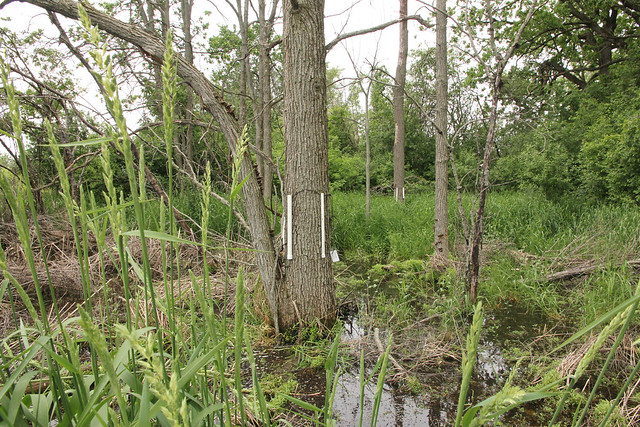 reptile amphibian survey treefrog pvc refugia tree