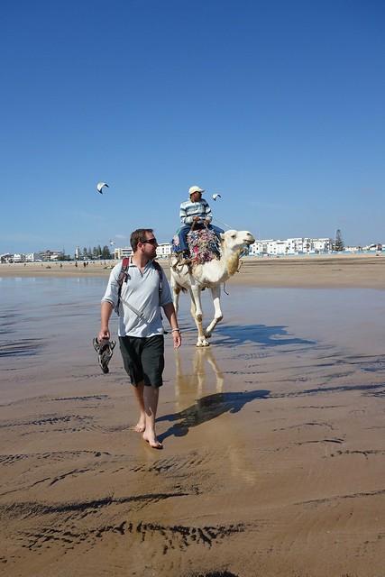 Beach Camel in Essaouira, Morocco