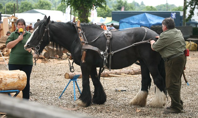 'Sally' - Logging horse