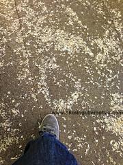 Sawdust Floors