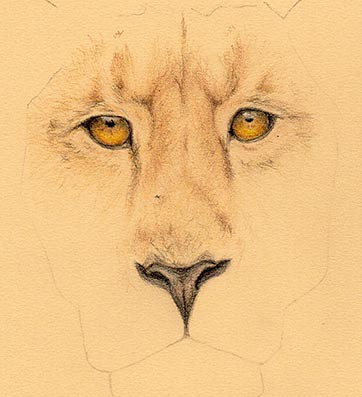 lionface2