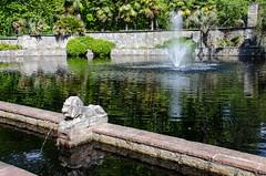 Norfolk Botanical Garden pond