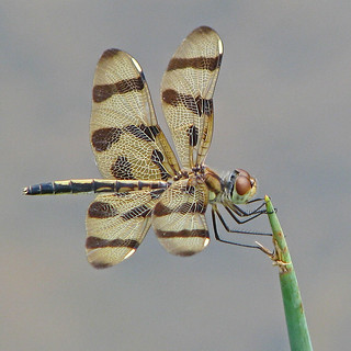 Halloween pennant on pointy stem