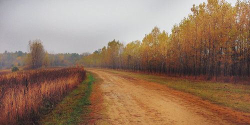 park county autumn trees fall colors field wisconsin landscape foliage oranges eauclaire iphone lowescreek vsco