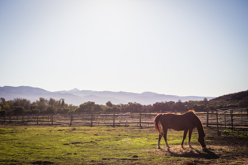 Take two on Horse Grazing in La Purisima Mission