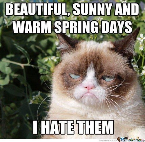 Grumpy Cat hates spring