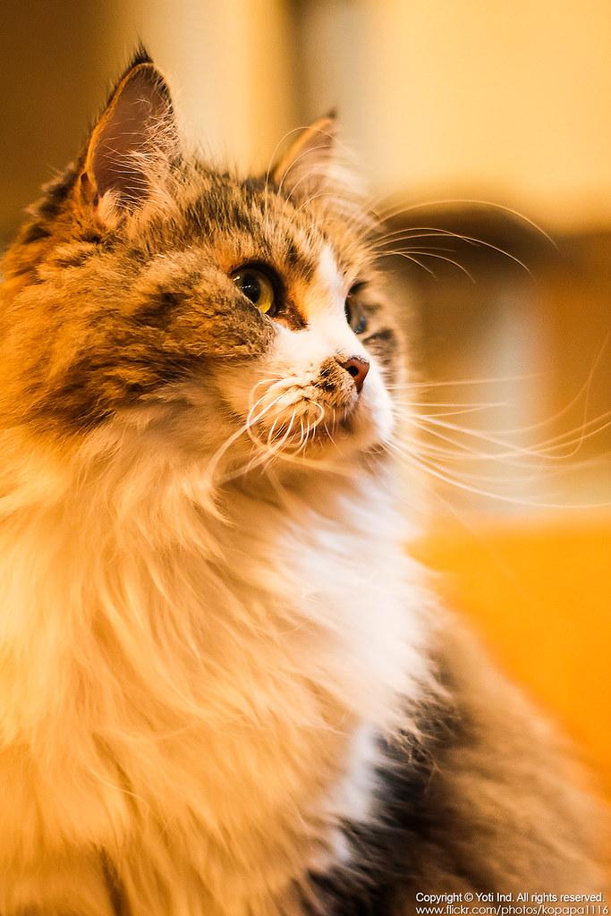 元氣貓主題餐廳 IMG_6098