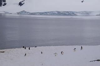 045 Wandeling Halfmoon Island - kinbandpinguins
