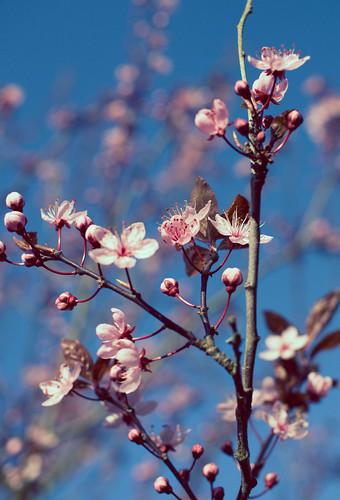 voorjaarsfoto