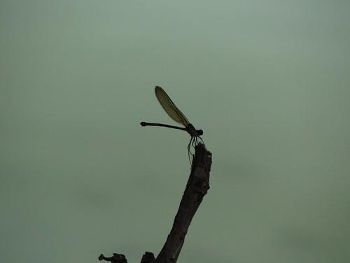 Naturaleza es gracia, sencillez, fragilidad, unidad y fuerza. by Richal Azuarte