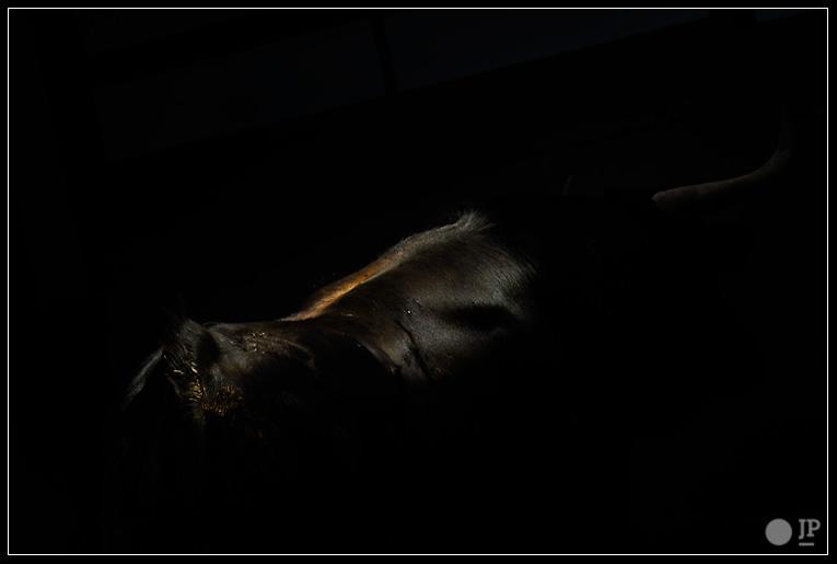 negro-listón