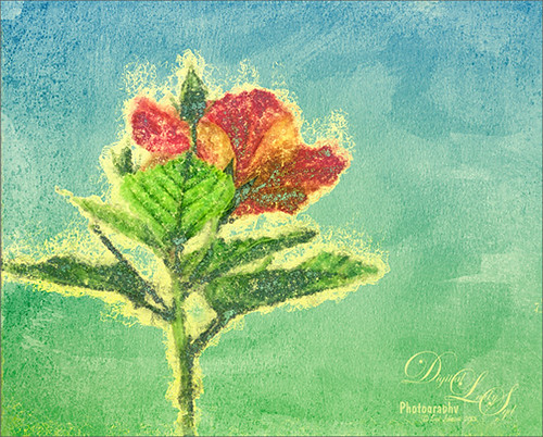 Image of a red hibiscus bloom done in Corel Painter particle brush