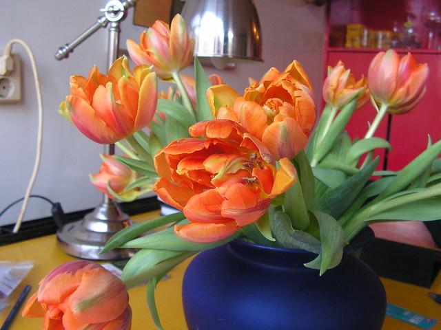Eerste tulpen...