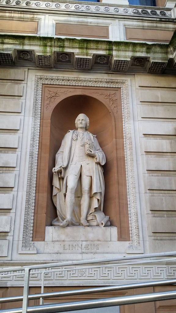 Linnaeus #sh