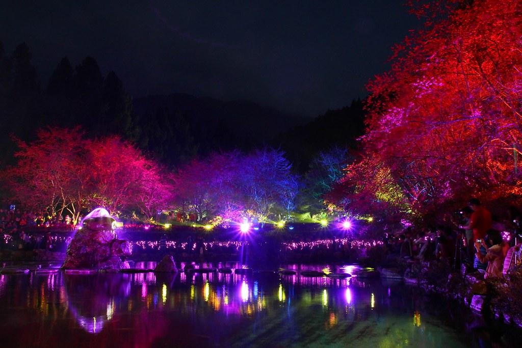 九族櫻花祭 (96)