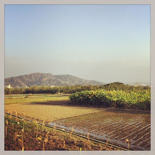 The View from the Neighborhood. #nantou #taiwan #farm #台灣 #南投